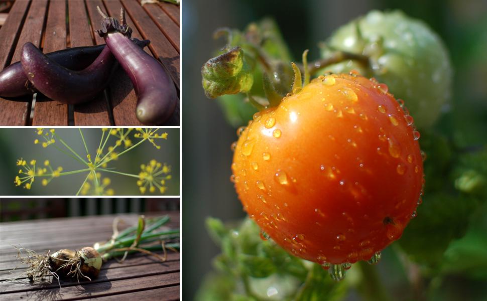 montage-september-garden
