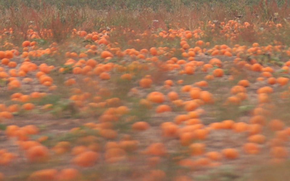 Pumpkins in Vancouver