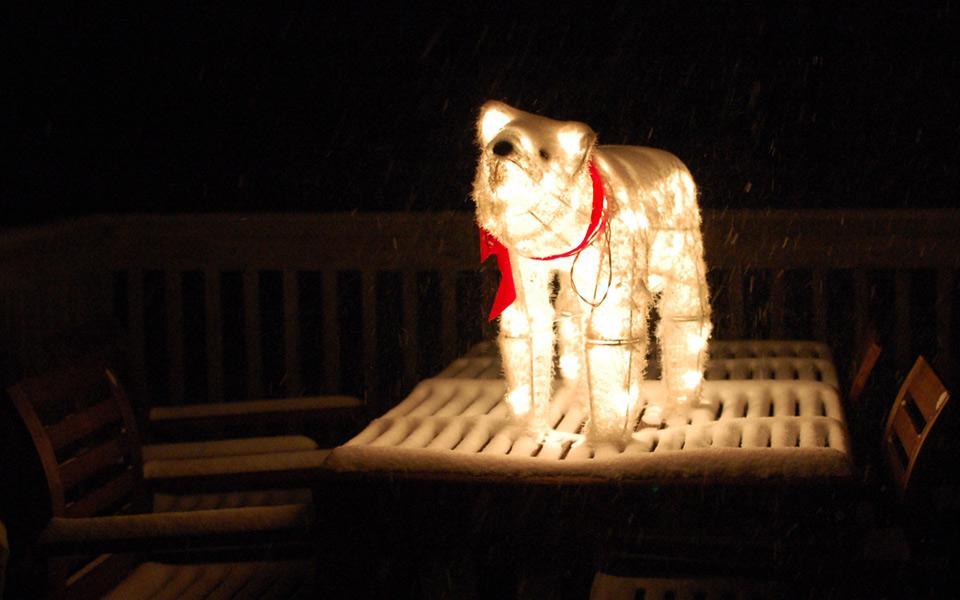 snowy polar bear