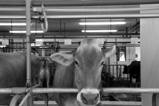 Arethusa Dairy Farm