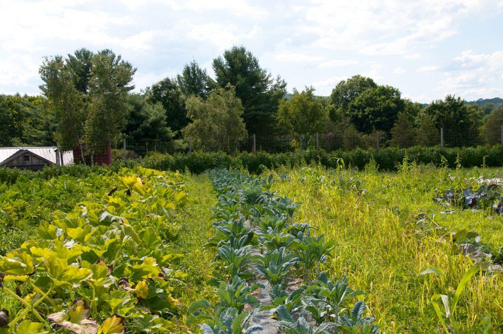 Back-40-Farm-Connecticut-19