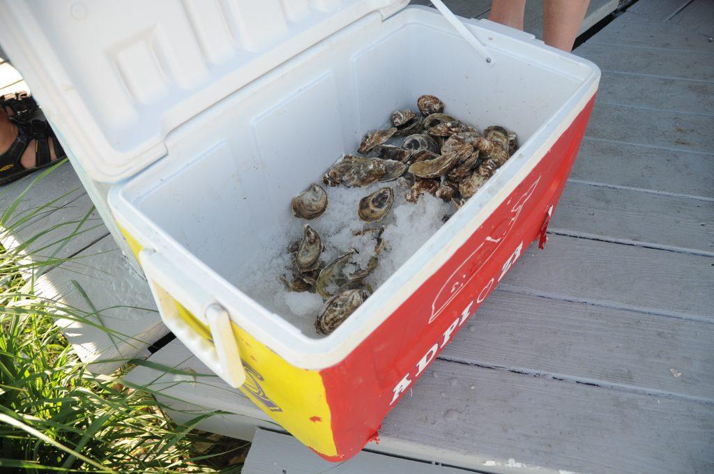 Hummock Island Oysters